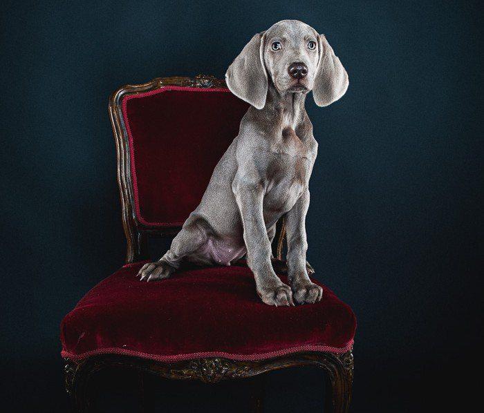 Hunde – Portrait im Studio